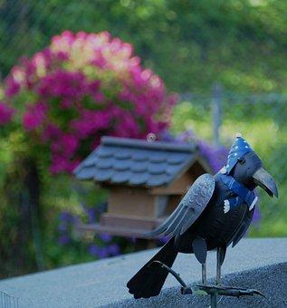 Raven, Sheet, Garden, Hood