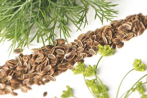 Dill, Kapormag, Dill Flower, Spice, Plant, Food, Herb