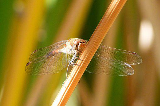 Dragonfly, Have A Look, Leaf