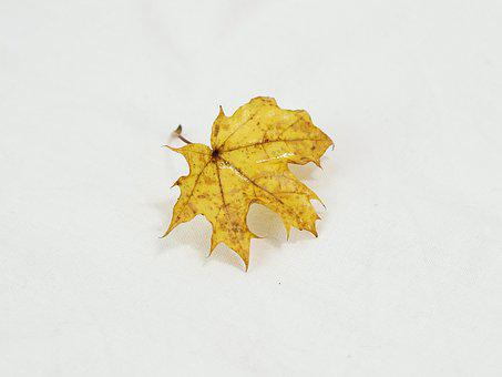 Leaf, Autumn, Leaves, Nature, Discoloration