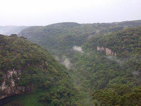 Cinnamon, Rs, Brazil, Valley, Snail, Photography