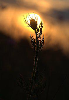 Sunset, Plant, Shadow, In The Evening, Sun, Silhouette