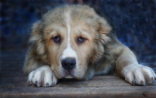 Puppy, Dog, Pets, View, Man's Best Friend, Animal, Pet