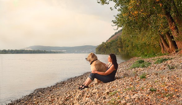 Summer, Dog, River, Vacation, Dogs, Nature, Girl