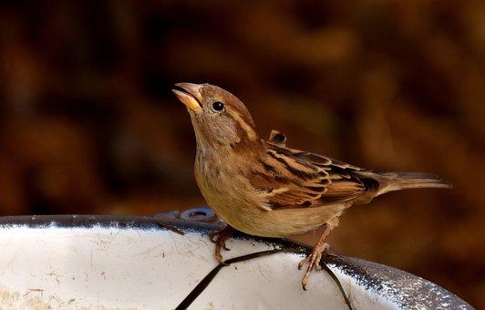 Sparrow, Water Bottle, Small Bird, Cute, Birdie