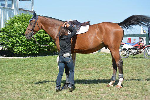 Horse, Rider, Equestrian, Animal, Sport, Equine