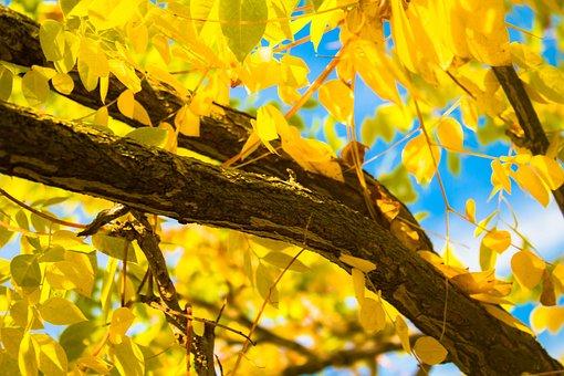 Yellow, Fall, Autumn, Season, Nature, Orange, Forest