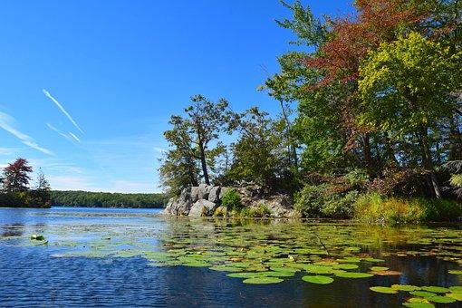 Lake, Trees, Lily Pads, Sunshine, Morning, Bright