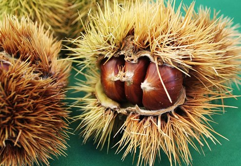 Chestnut, Chestnuts, Curly, Season, Nature, November