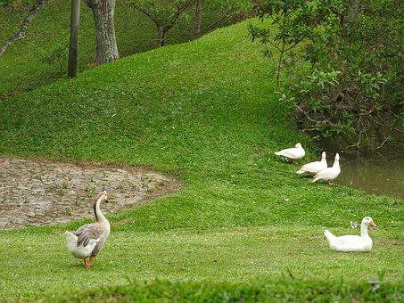 Park Hotel Mantiqueira, Barbacena, Ducks, Geese