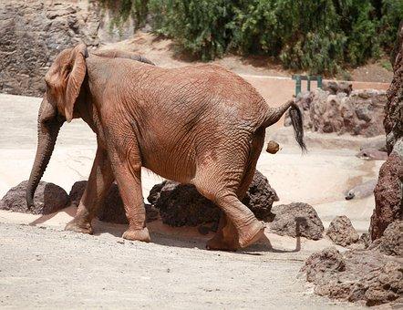 Elephant, Kot, Animal, Zoo, Do Business