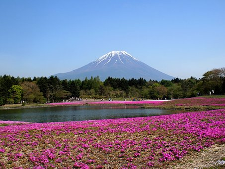 Fuji, Mt Fuji, Phlox