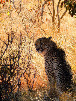 South Africa, Wild Animals, Nature, Photography Wild