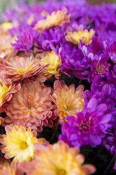 Flower, Orange, Yellow Rose
