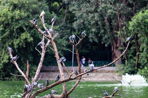 Birds, Pigeons, Tree, Group
