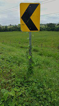 Road Signs, Yellow, Reflector, Pointer, Vines, Grass