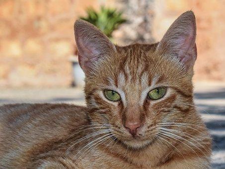 Cat, Outdoor, Homeless, Animal, Kitten, Stray, Tabby