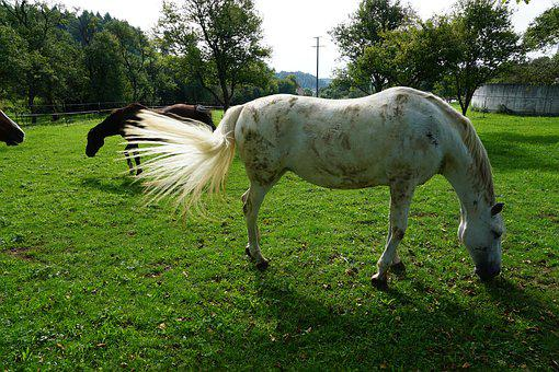 Horse, Nature, Pasture, Garden, Tree, Young, Animal