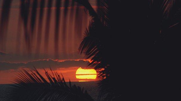 Sunset, Kona, Hawaii, Palm, Trees, Palm Trees, Sun