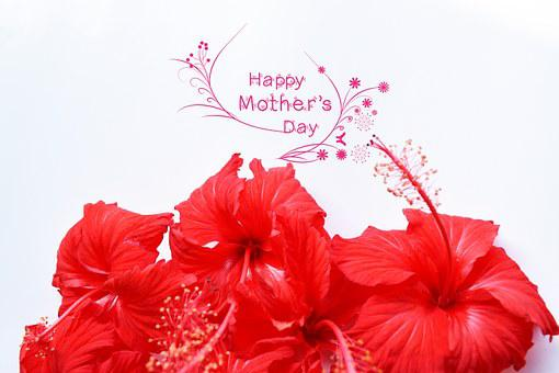 April, Background, Beauty, Bloom, Blossom, Bouquet, Bow