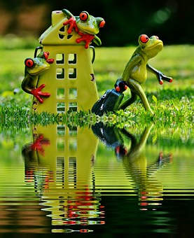 Frogs, Farewell, House, Mirroring, Water, Bank, Cute