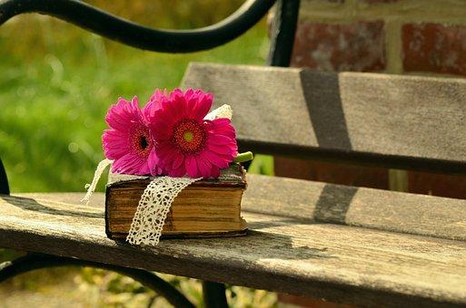 Bank, Gerbera, Pink, Flower, Blossom, Bloom, Romantic