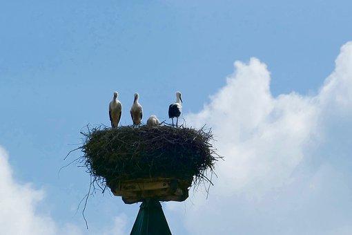 Stork, Nest, Bird, Nabburg, Rattle Stork, Storks