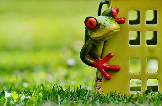 Frog, Home, Funny, Cute, Sweet, Decoration, Fig