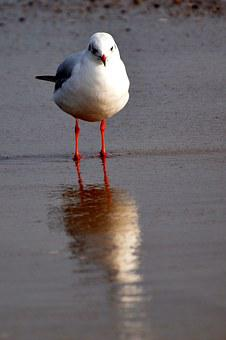 Seagull, Sea, Boot, Port, Ship, Maritime, Beach, Dew