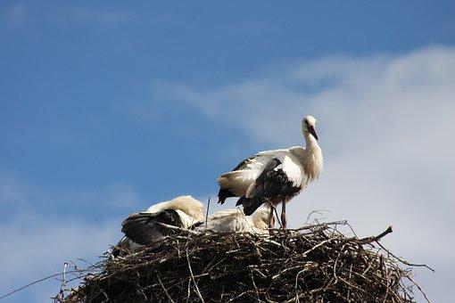 Nature, Birds, Stork, Storchennest, Animals, Spring