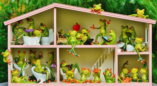 Frogs, Funny, Home, Residents, Shared Apartment, Live