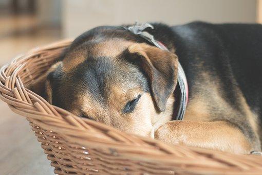 Dog, Sleep, Animal, Rest, Tired, Concerns, Pet, Hybrid