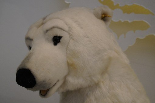 Polar Bear, Bear, White, Animal, Predator, Teddy