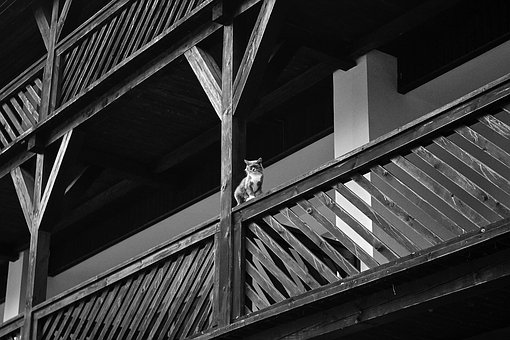 Black And White, H B, Architecture, Animals, Cat, Line