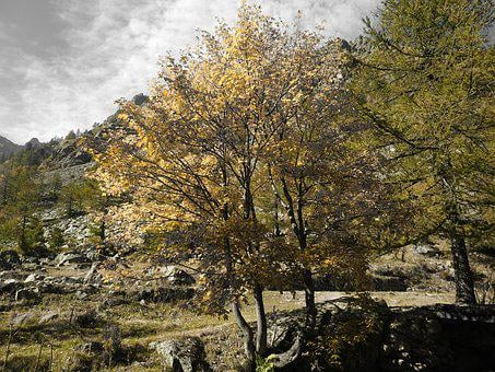 Autumn, Color Games For Juve, Trees