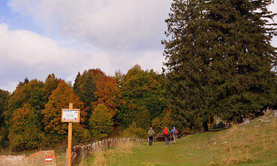 Excursion, Forest, Autumn, Trail, Walking With Sticks