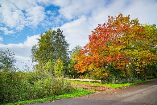 Autumn, Tree, Colorful, Chestnut, Nature, Fall, Orange