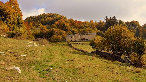 Excursion, Trees, Autumn, Trail, Mountain