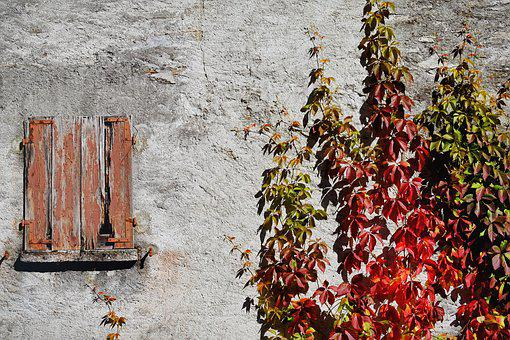 Grapevine, Wine Partner, Autumn, Leaves, Fall Foliage