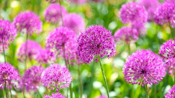 Blossom, Bloom, Flower, Karlovy Vary, Nature, Plant