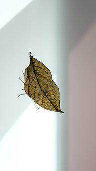 Butterfly, Indian Journal, Nature, Leaf