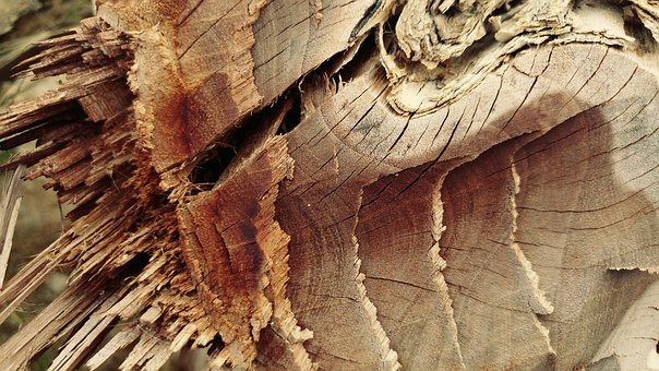Chopped, Cracked, Log, Wood, Timber, Lumber, Textures