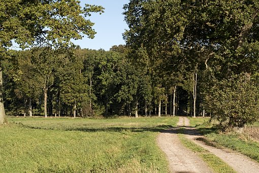 Forest, Forest Path, Trees, Deciduous Trees