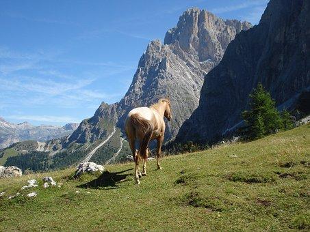 Dolomites, Val Gardena, South Tyrol, Haflinger, Horse