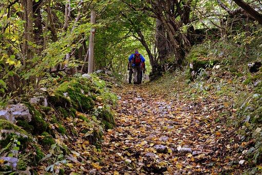 Trail, Walk, Excursion, Forest, The European Path, E5