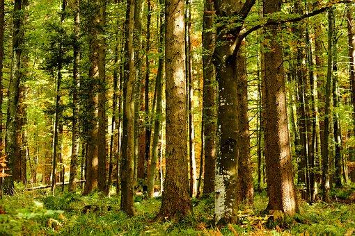 Forest, Autumn Forest, Trees, Mystical, Dark