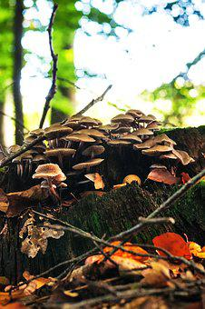 Mushrooms, Forest, Autumn, Nature, Mushroom Picking