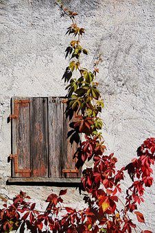 Grapevine, Wine Partner, Autumn, Leaves, Fall Foliage