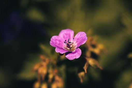 Flower, Purple, Outdoors, Flowers, The Nature Of The