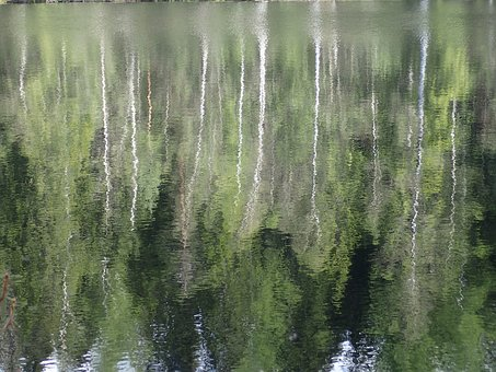 Forest, Water, Vermont, Nature, Pond, Hidden Pools
